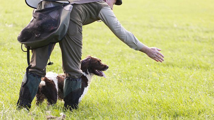 Jetzt geht es Tierhassern an den Kragen: Erster Giftköder-Spürhund im Einsatz