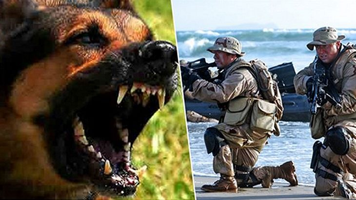 So kontert man einen Hunde-Angriff