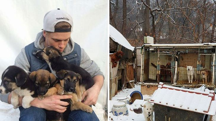 Gus Kenworthy retten 90 Welpen das Leben