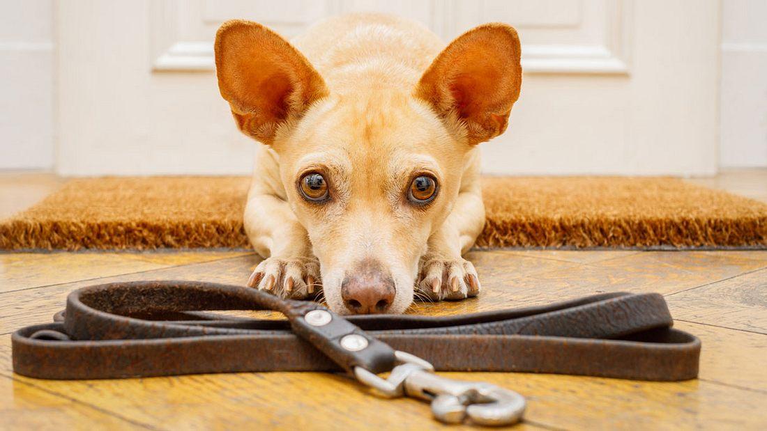 Sachkundenachweis Niedersachsen: Testfragen für den Hundeführerschein