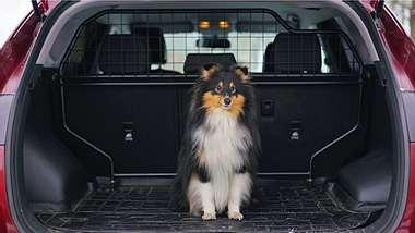 Hundegitter Auto - Foto: iStock / Eudyptula