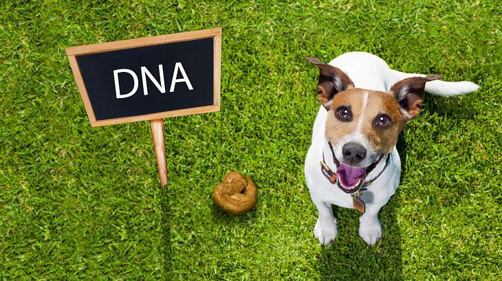 DNA-Datenbank für Hundekot?