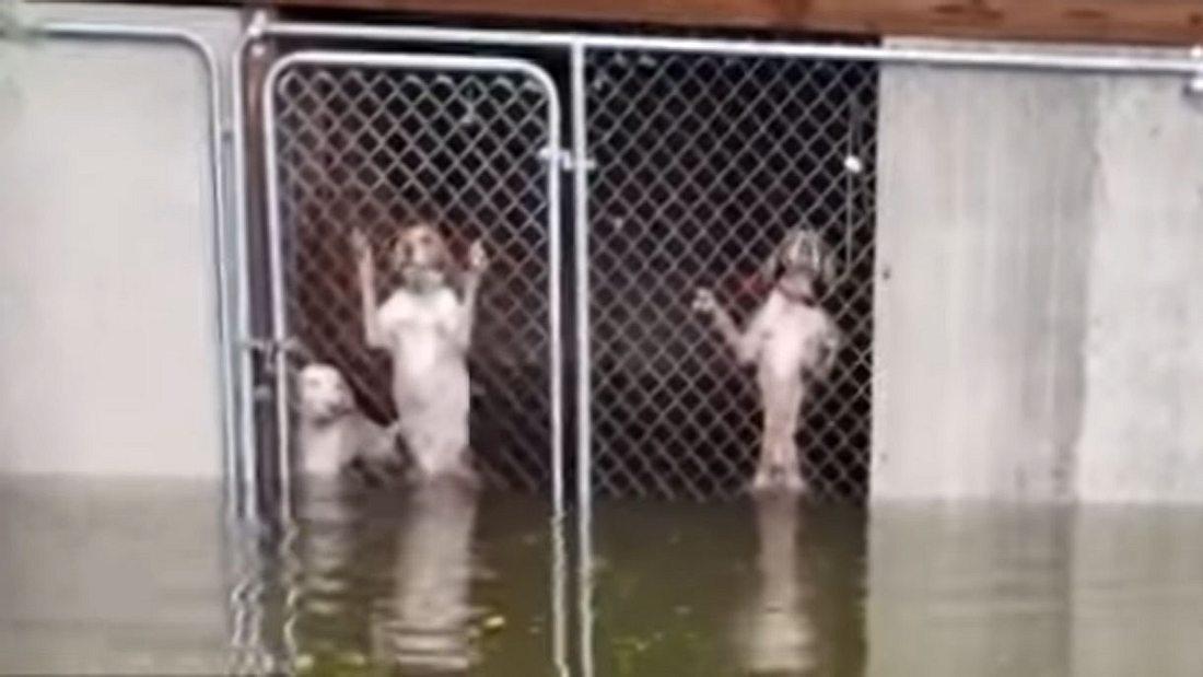 Hunderettung während Hurrikan Florence wütet.