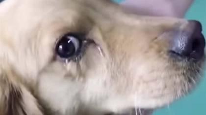 Tierische Freudentränen: Hund wird vor China-Schlachter gerettet