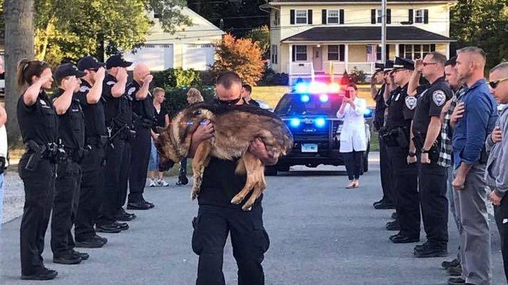 Emotionaler Abschied von Polizeihund Hunter