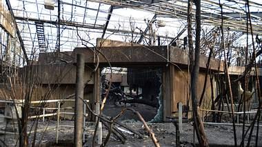 Deutscher Comedian über Krefelder Zoo-Brand: Affen brennen richtig gut!
