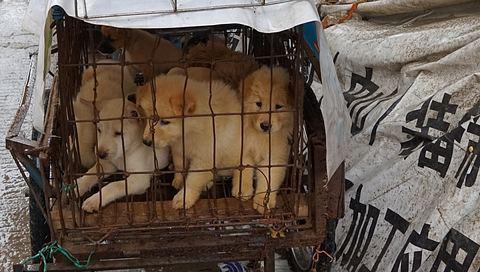 Corona: Erste Stadt in China verbietet Verzehr von Hunde- und Katzenfleisch