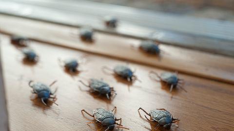 Wegen Corona: Kammerjäger warnt vor Schädlingsapokalypse in Deutschland