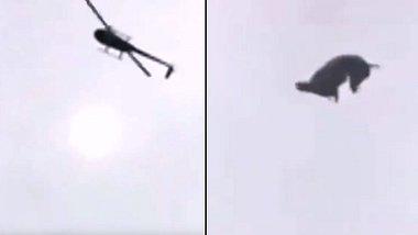 Unbekannte werfen Schwein aus Helikopter - in Pool von Millionär