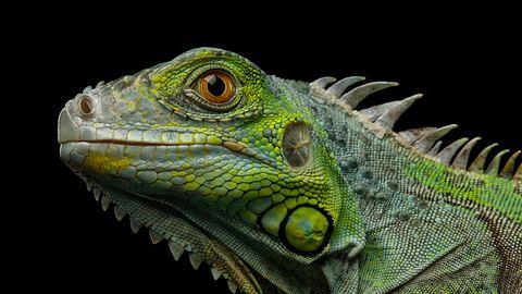 Kein Scherz! Wetterdienst warnt vor Reptilien-Regen