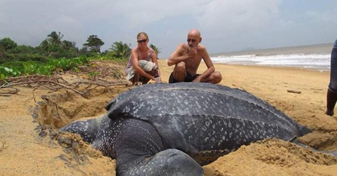 Größte Meeresschildkröte der Welt aufgetaucht - und sie
