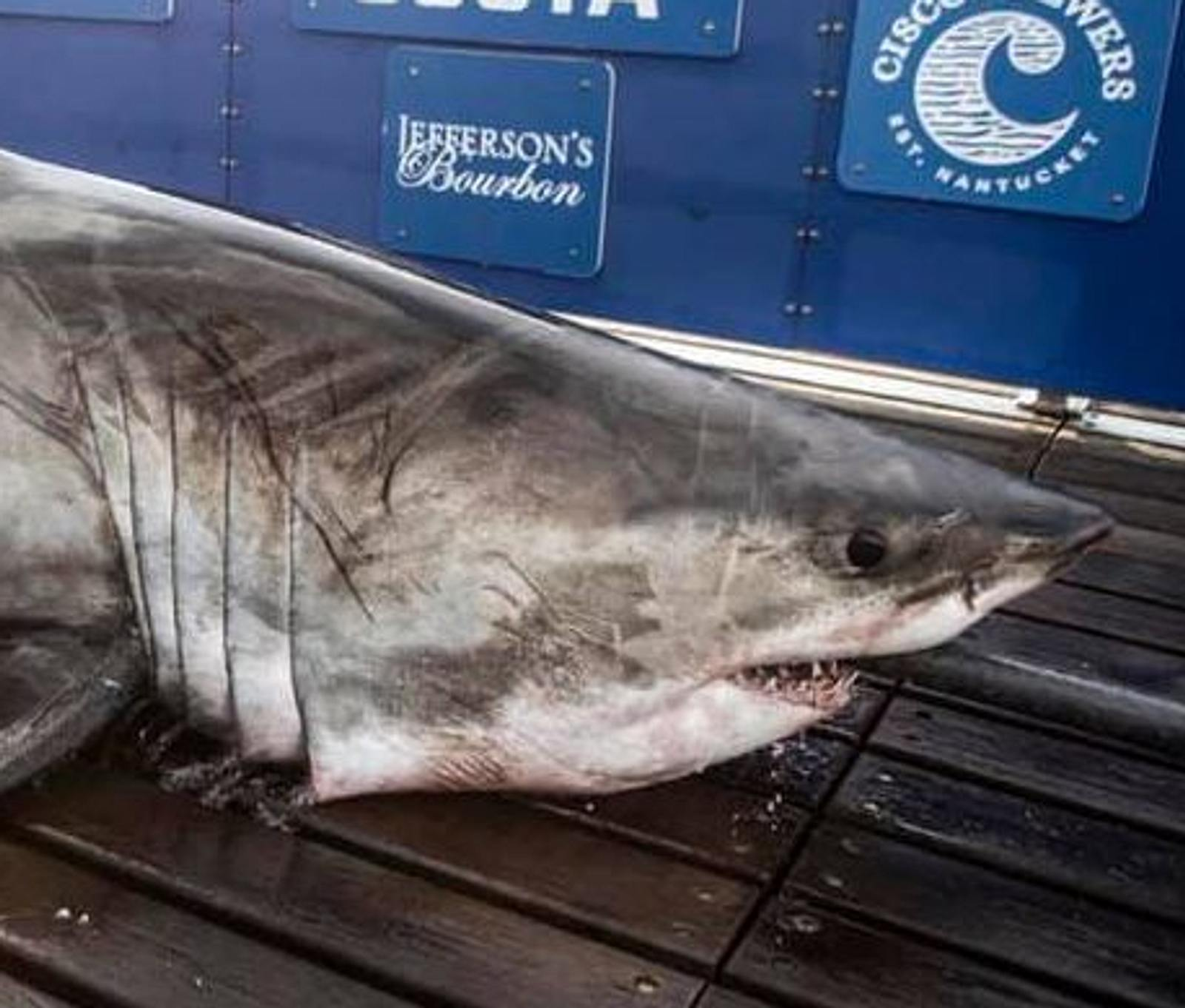 Gewicht Hai