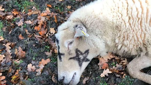 Pentagram-Killer: Britische Landwirte in Angst
