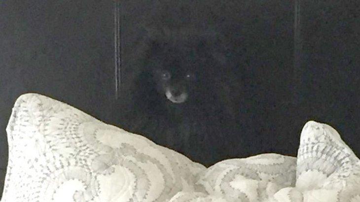 Na, hast du den kleinen Hund in diesem Bild entdeckt?