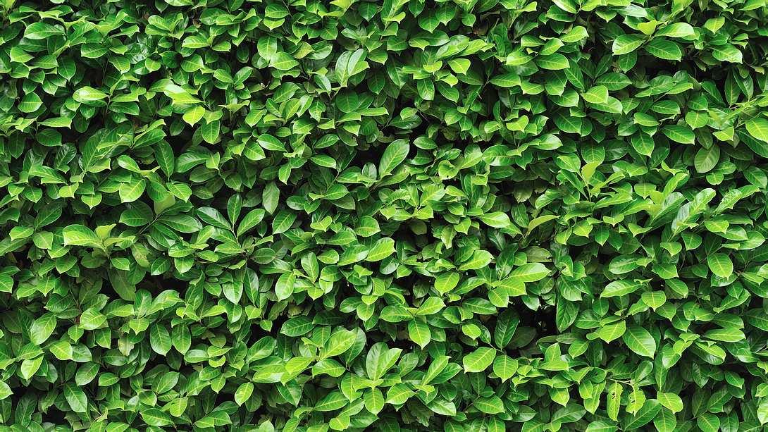 Grüne Blätter - Foto: iStock / andDraw