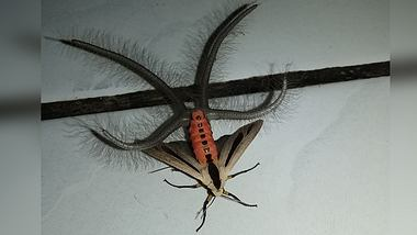 Mann findet Horror-Insekt in seiner Wohnung und filmt es