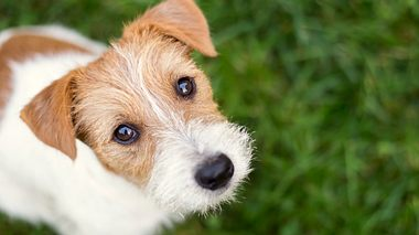 Hund - Foto: iStock/Wavetop