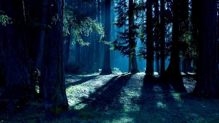 Orientierungslos und nackt im dunklen Wald