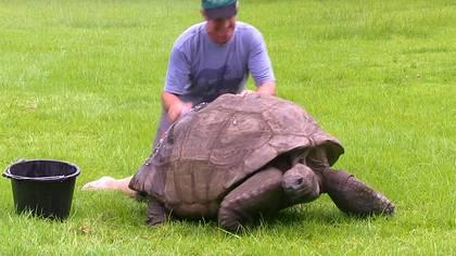 Die älteste Schildkröte der Welt ist schwul