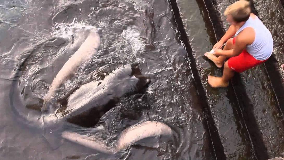 Ein Junge füttert im Hafen von Vueltas einen Stechrochen - Foto: YouTube/gekkovision