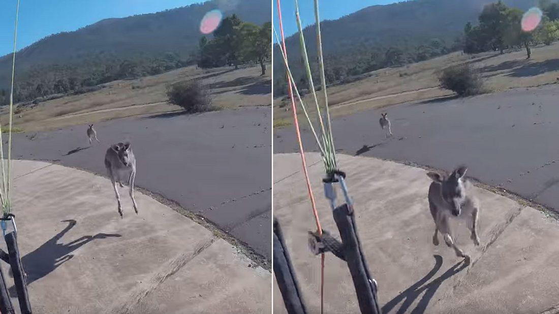 Känguru attackiert Extremsportler.