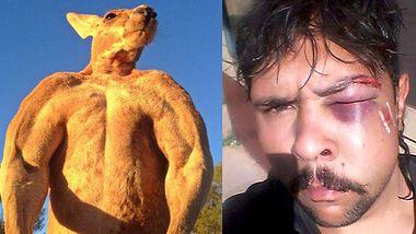 Känguru gibt Jäger eine Kopfnuss - Foto: Joshua Hayden / CNN / Montage Männersache