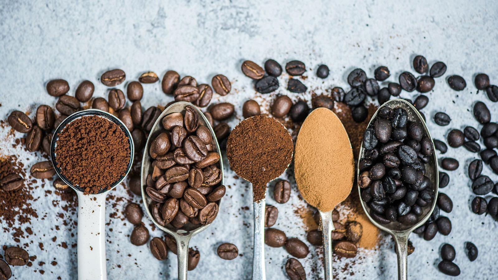 Teuerster Kaffee der Welt: So viel kostet das Kilo Kopi Luwak