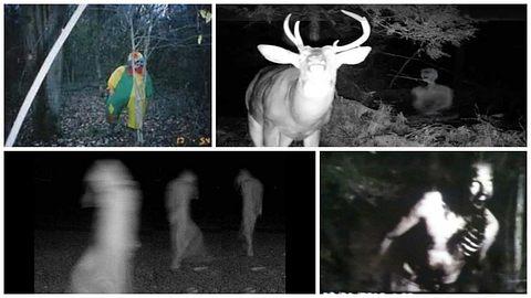 Nachts im Wald: 11 unheimliche Bilder von Sensor-Kameras