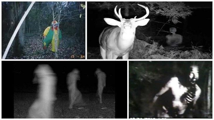 Diese 11 unheimlichen Bilder haben Kameras mit Bewegungssensoren nachts im Wald aufgenommen