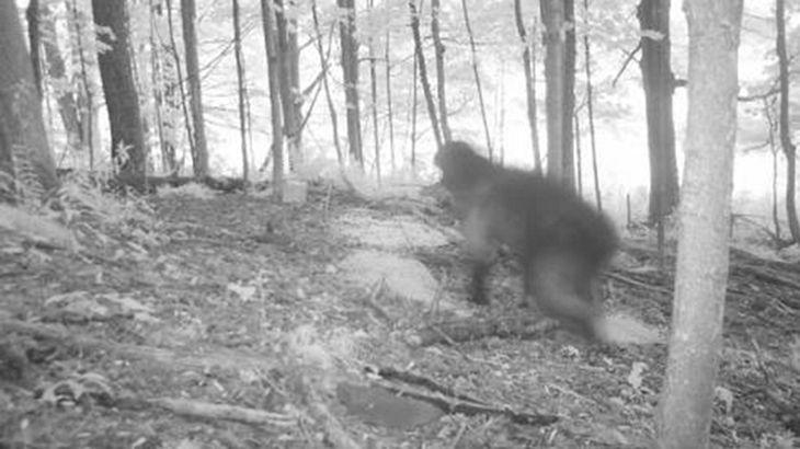 Eine Kamera mit Beweungssensor hat nachts im Wald diese Aufnahme gemacht