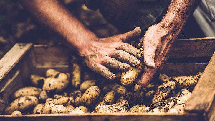 Top Wie lange sind Kartoffeln haltbar? | Männersache AC58