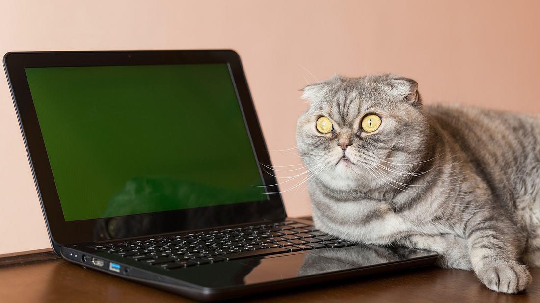 Katze am Laptop