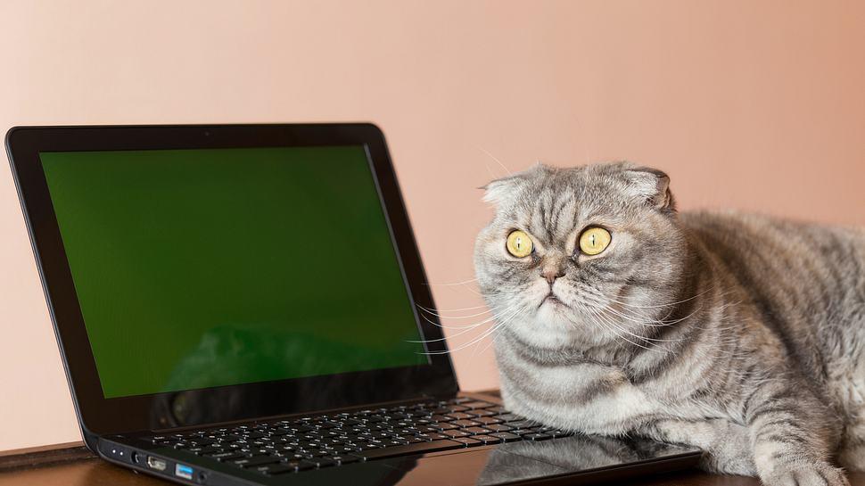 Katze am Laptop - Foto: iStock / SVPhilon