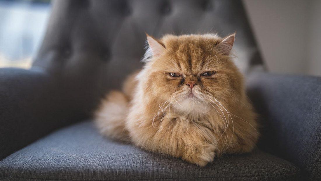 Diese Katze hat dunkle Geheimnisse