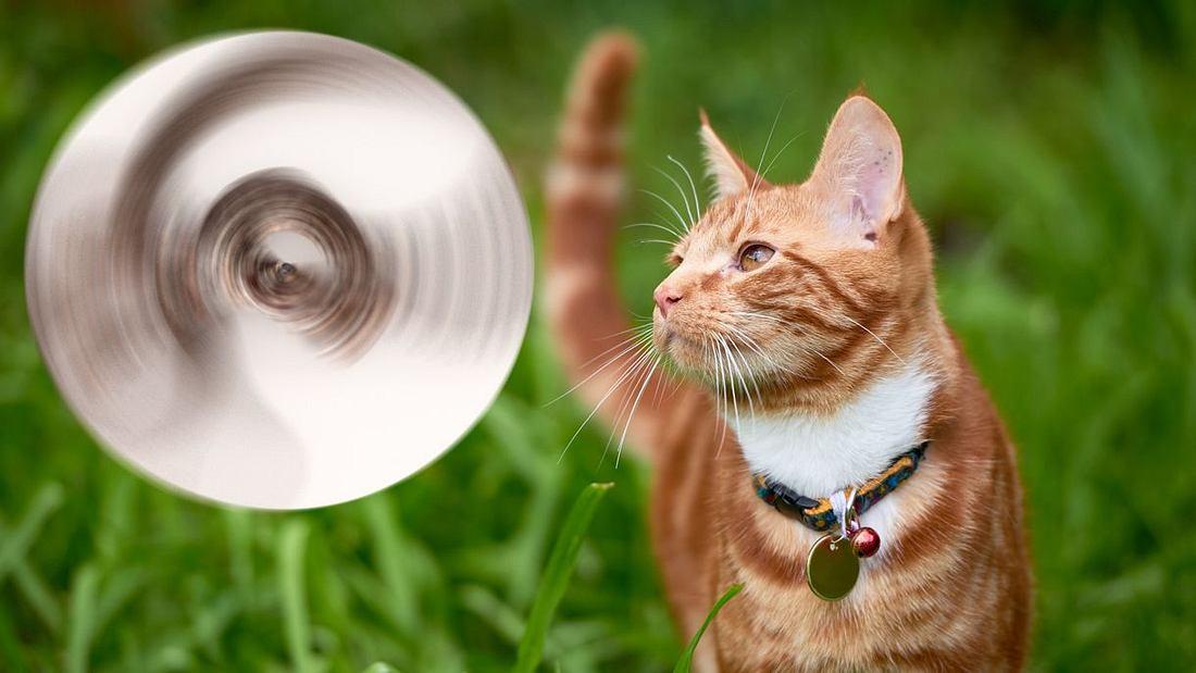 Katze bringt überraschendes Geschenk mit
