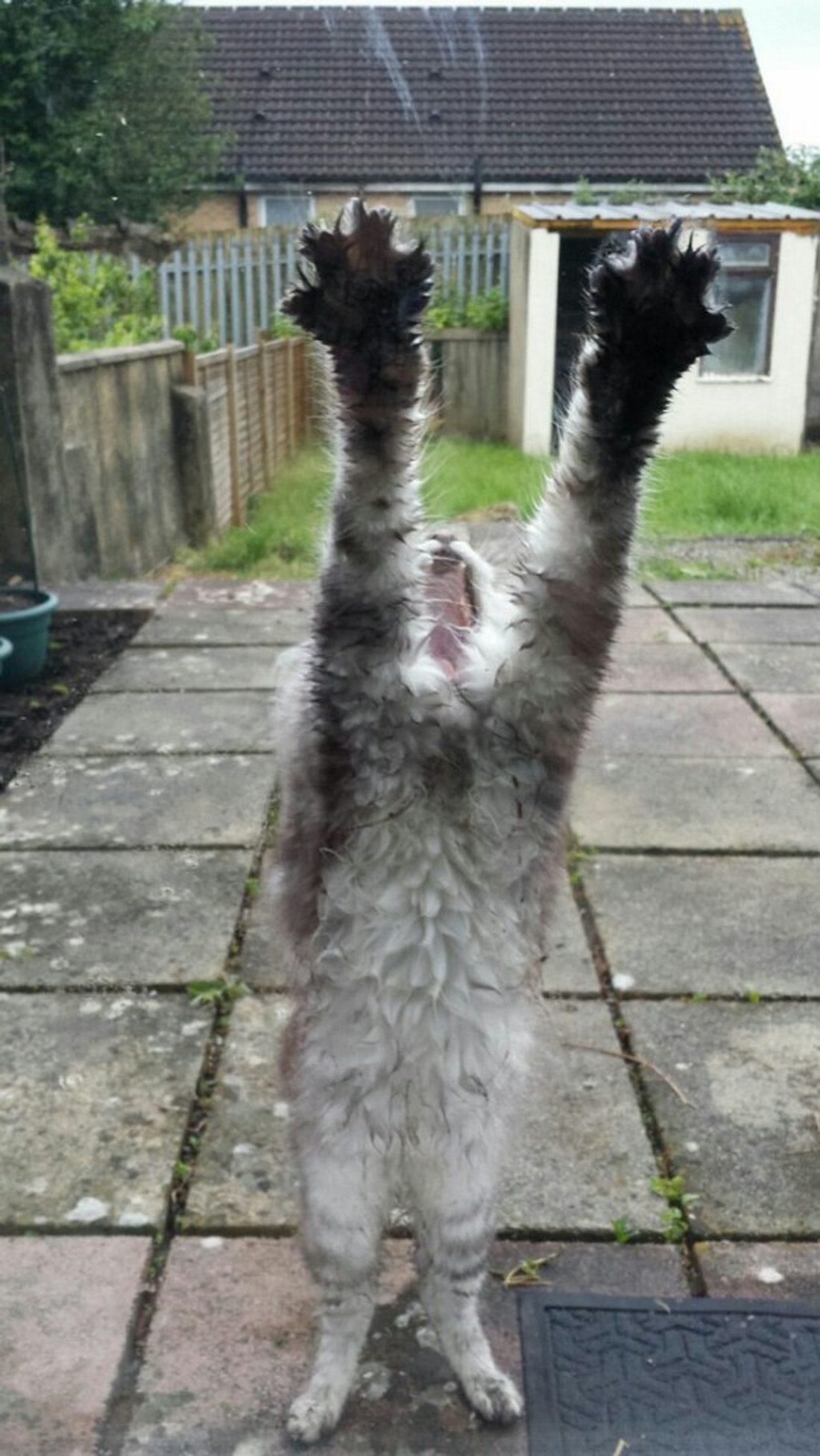 Eine ausgesperrte Katze