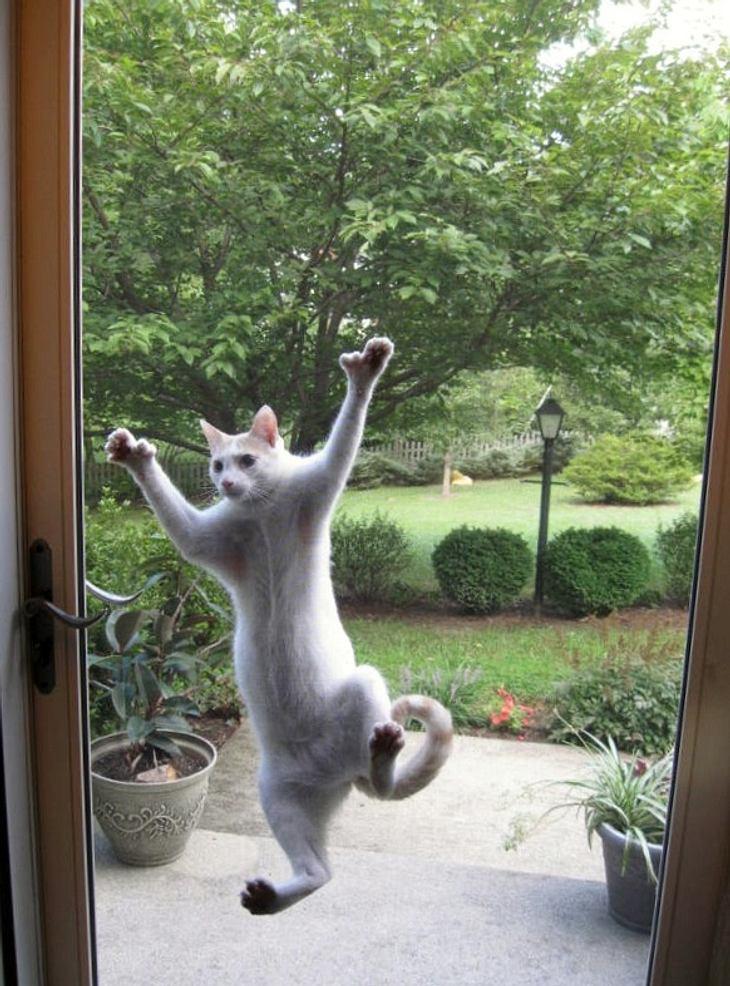 Eine ausgesperrte Katze klebt an einer Fensterscheibe