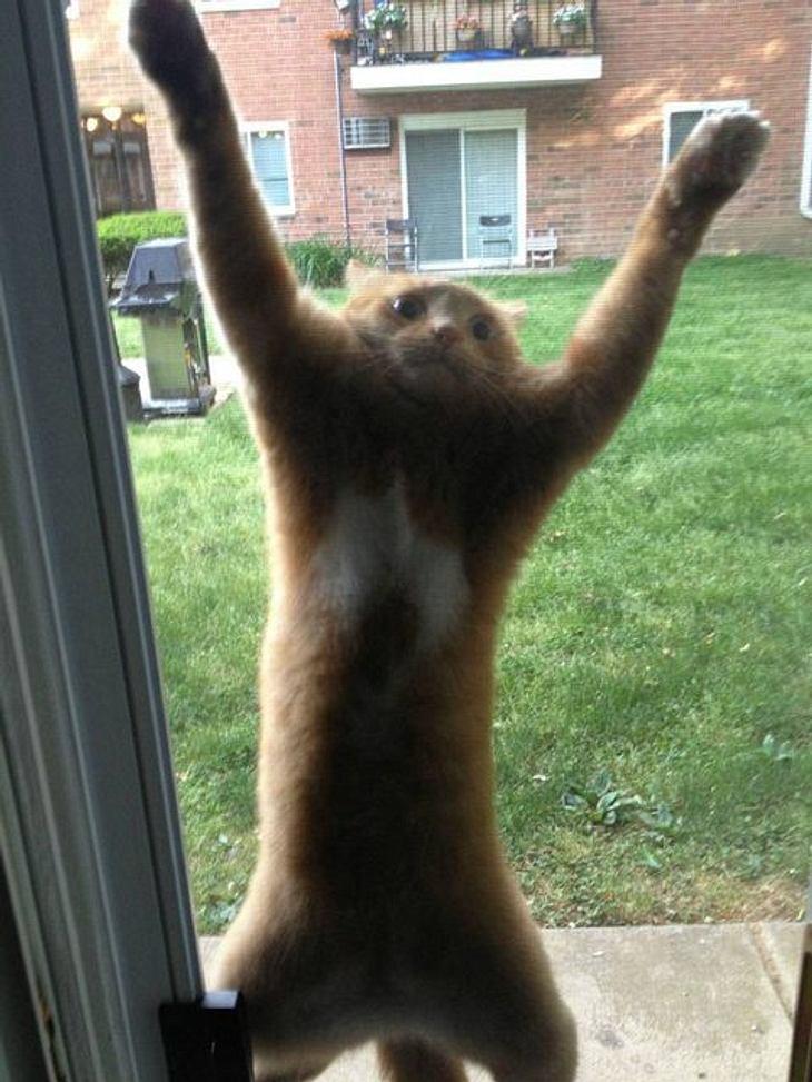 Eine orangefarbene Katze wurde ausgesperrt