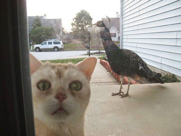 Diese Katze wurde ausgesperrt