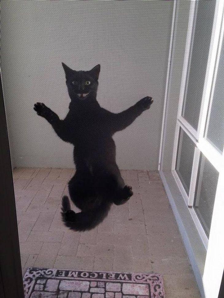Eine schwarze Katze, die ausgesperrt wurde