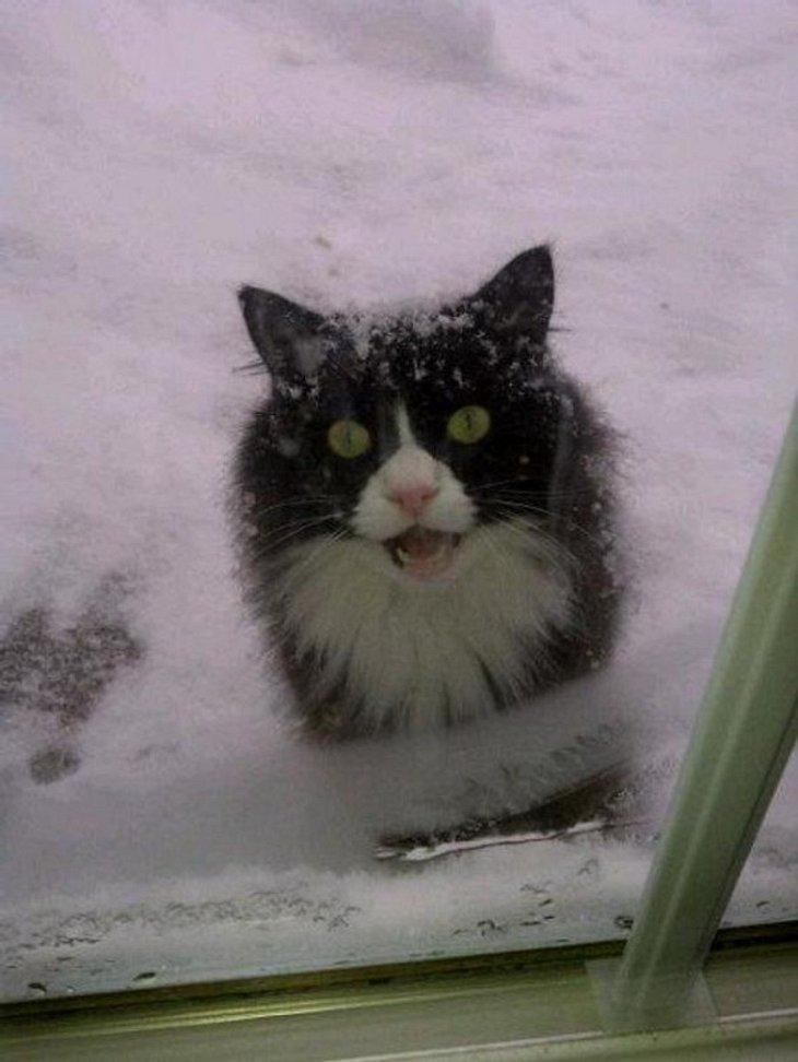 Eine ausgesperrte Katze im Schnee