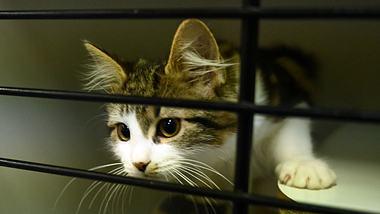 Katze in einem Käfig - Foto: Getty Images / Peter Parks