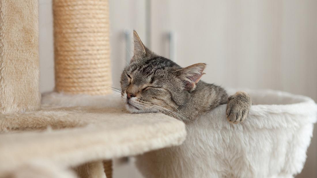 IKEA: Möbelhaus bringt Kollektion für Hunde und Katzen