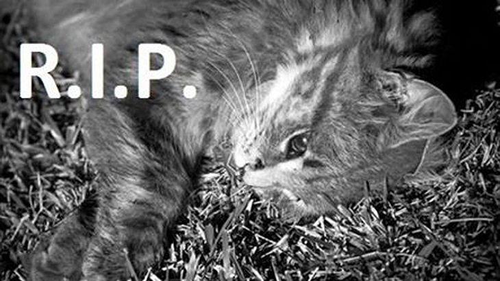Horror-Tat in Sachsen: Perverser tötet Katze auf abscheuliche Art und Weise