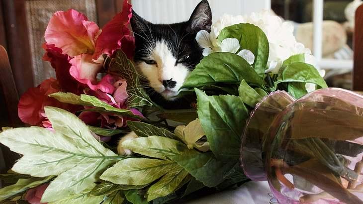 Warum schmeißen Katzen ständig Dinge um?