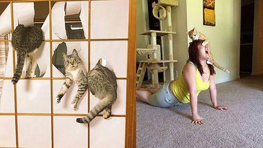 15 Beweise dafür, dass Katzen riesige Arschlöcher sind
