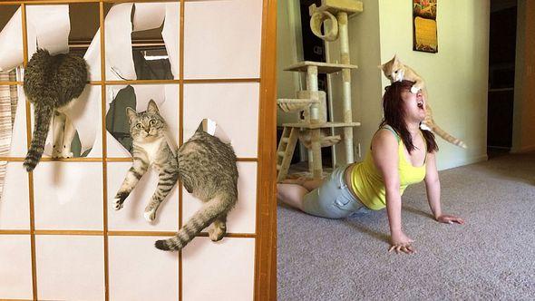 11 Beweise dafür, dass Katzen riesige Arschlöcher sind