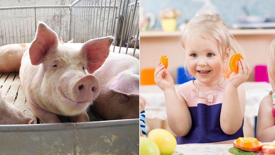 Kein Schweinefleisch In Kitas