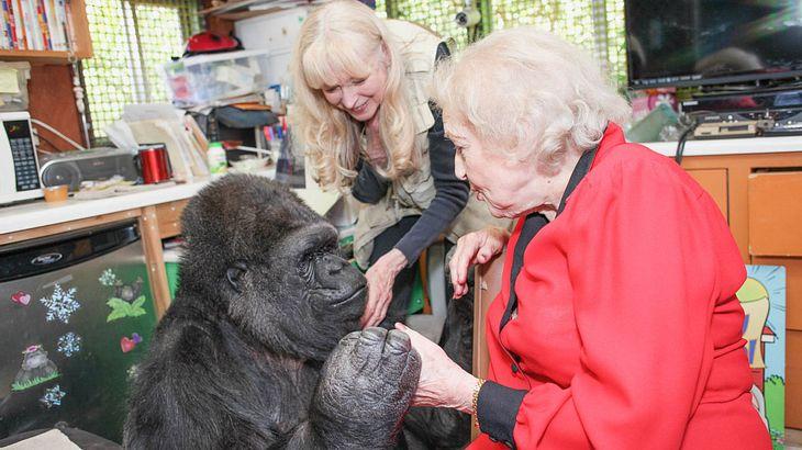 Schauspielerin Betty White mit Gorilla-Dame Koko