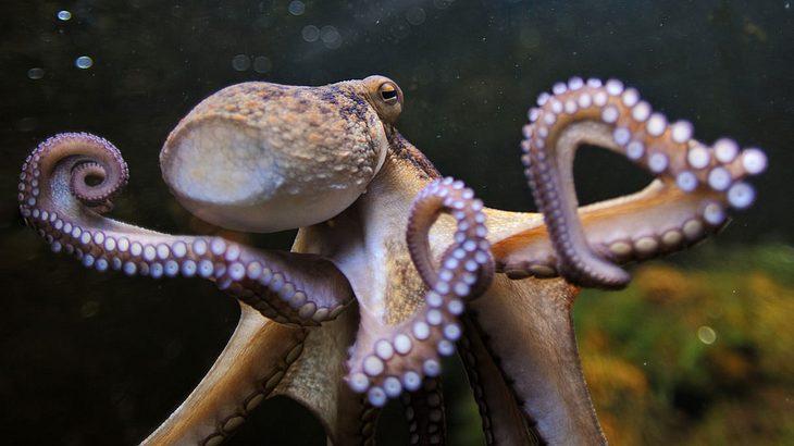Bloggerin versucht lebendigen Oktopus essen - großer Fehler!